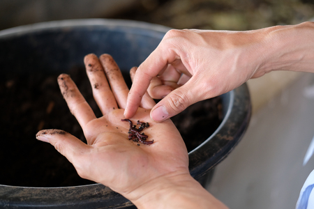 farmer hand holding earthworm. composting worm for producting compost manure fertilizer Banque d'images - 119821380
