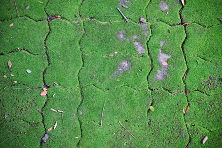 green moss growing on footpath sidewalk pavement. background texture Banco de Imagens