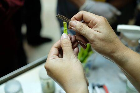 Planta de corte manual para cultivar en botella de vidrio en técnica de cultivo de tejidos Foto de archivo