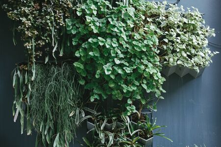 plant growing vertically in vertical garden. vegetable planted in small space pot on wall