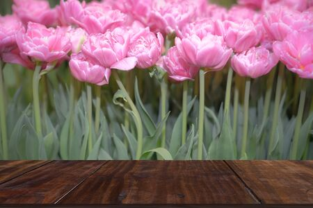 flowerbed of pink double princess tulip flower