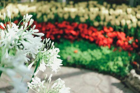 kwitnąca roślina kwiatowa w ogrodzie botanicznym