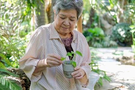 asian old asian elderly senior elder woman checking plant in garden