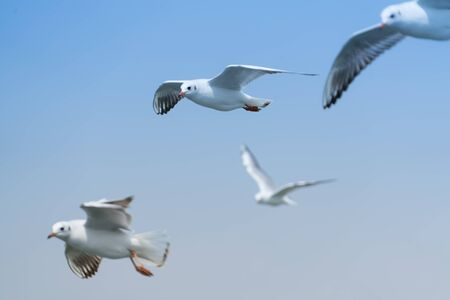 wingspan: Flying group seagull on blue sky background