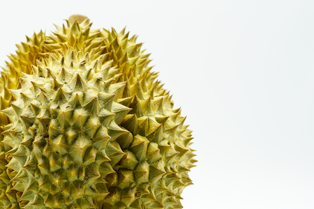 Fresh Cut Monthong Durian on white background,closeup view of Durian,Monthong Durian.Mon Thong.Beautiful Durian.Durian D158 Stock Photo