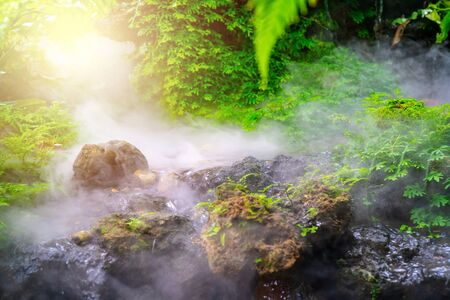 green garden with morning fog and waterfall