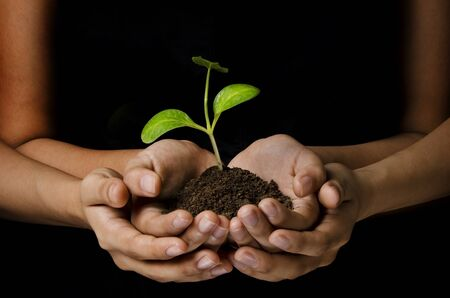 women hands holding a young plant with black background