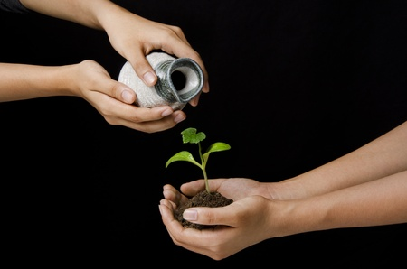 purring: woman hands purring water on sapling Stock Photo
