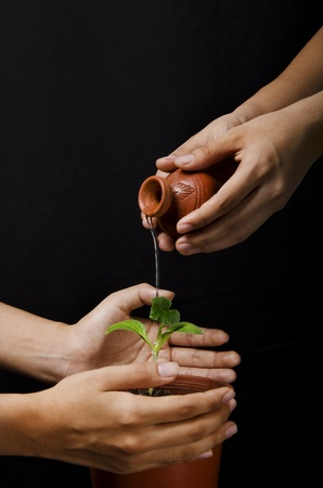 purring: purring water on sapling with protecting Stock Photo