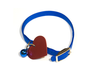 A blue cat collar with bell and heart shaped identification tag. The more tinkling from the attachments the less chance of sneaking up on birds! photo