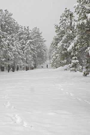 laden: A distant man and dog walk on a snow covered path lined by snow laden pine trees during a snow storm.   Stock Photo