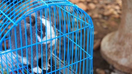 rabbit cage: Coniglio grigio in blu gabbia