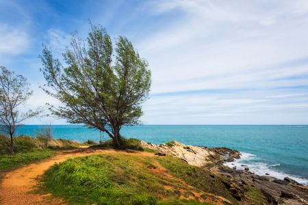 samet: Landscape of tree on sea coast in Koh Samet island, Rayong, Thailand Stock Photo