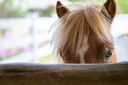 caballo: La cara del primer del caballo en el establo Foto de archivo