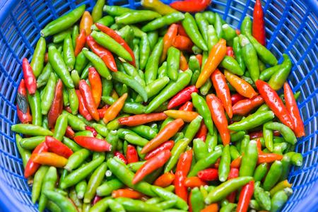 padi: Chilli Padi, Birds Eye Chilli, Bird Chilli, Thai pepper and Capsicum annuum in basket Stock Photo