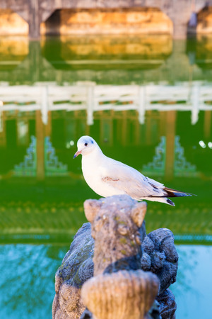 wooden post: Seagull standing on a wooden post in pond with Yuantong temple background, Kunming, Yunnan, China Stock Photo