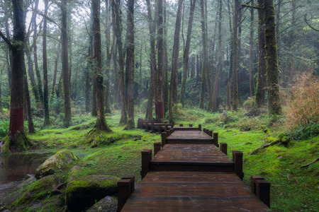 A green path in Alishan National Scenic Area, Chiayi Province, Taiwan