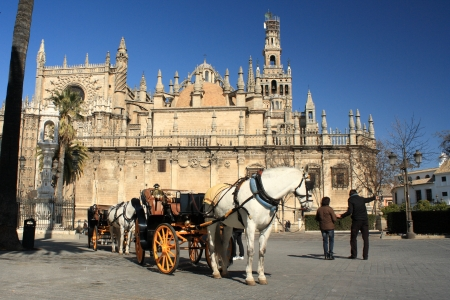horse drawn carriage: horse-drawn barouche waiting for turists in Seville