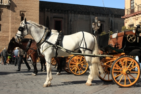 horse drawn carriage: horses with vintage carriages Stock Photo