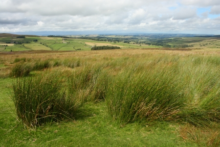 moors: tufts of grass in Yorkshire Moors