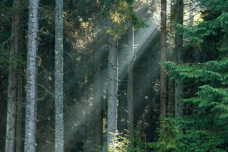 sunrays breaking through forest  Stock Photo