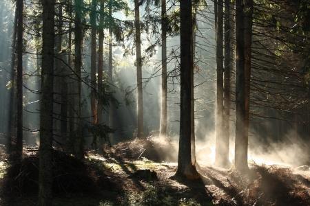 早朝の霧の森で 写真素材