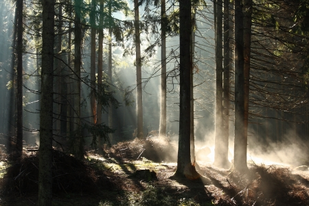 early morning mist in forest photo