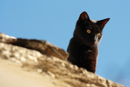 watchful: watchful black cat Stock Photo