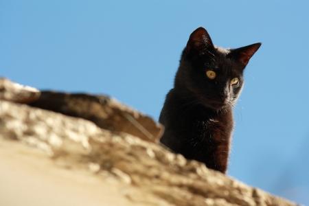 watchful black cat Stock Photo - 15966116
