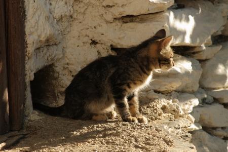 resting tabby kitten