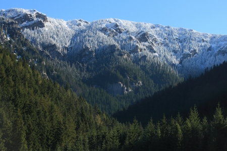 frost covered trees in forest in Low Tatras