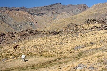 horses grazing on dry slopes in Sierra Nevada, Spain Stock Photo