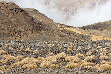 dry grass growing on volcanic ash photo