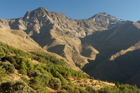 pine woods on the slopes of Sierra Nevada in Spain