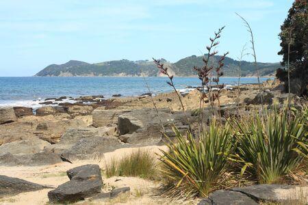 new zealand flax: Langs Beach with Harakeke plants