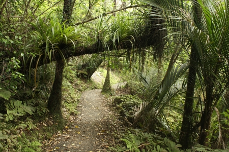 ranges: footpath in rain forest at Waitakere Ranges Stock Photo