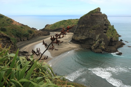 Piha Beach with Taitomo Island, New Zealand photo