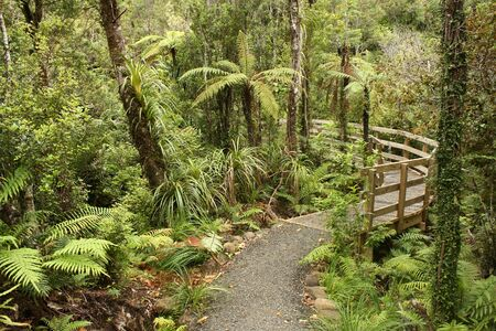tropical native fern: track through rain forest in New Zealand Stock Photo