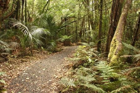 path in Waitakere Ranges rain forest Stock Photo - 17229961
