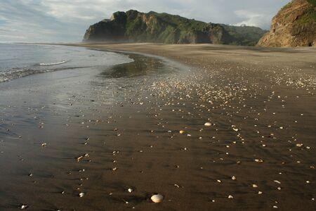 seashells at Karekare beach