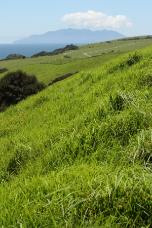 hills with green grass in New Zealand photo