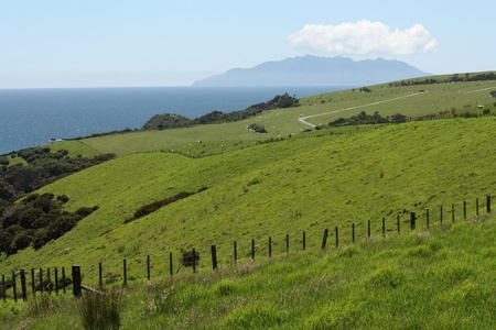 rolling hills with green grass in Tawharanui Regional Park, New Zealand photo