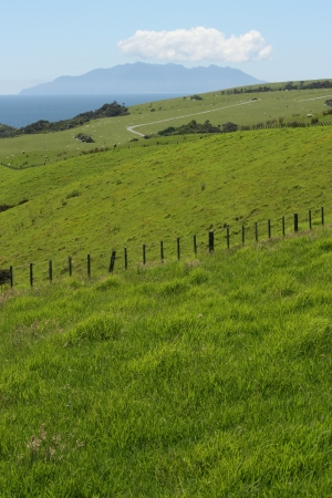 green pastures at Tawharanui Peninsula, New Zealand photo