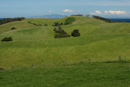 green hills in Tawharanui Regional Park photo