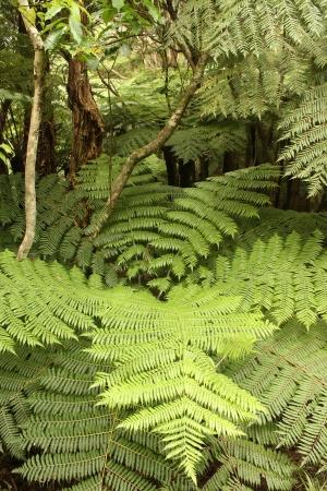 ferns in tropical rainforest