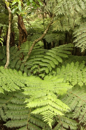 ferns in tropical rainforest