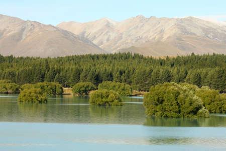 submerged: submerged trees at Lake Tekapo, New Zealand Stock Photo