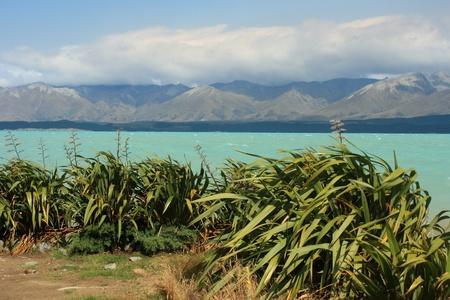 new zealand flax: New Zealand Flax plants at Lake Pukaki Stock Photo
