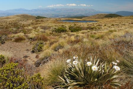 anau: grassland above lake Te Anau