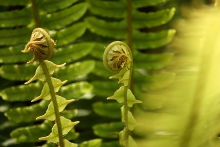 fresh fern fronds